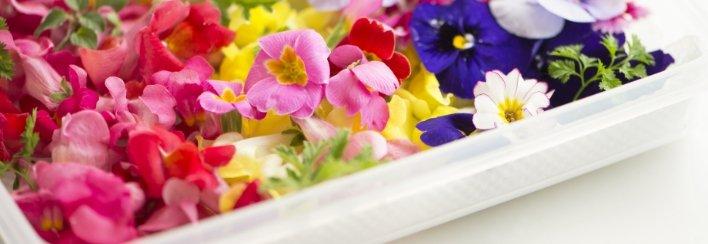 Vaschette di fiori