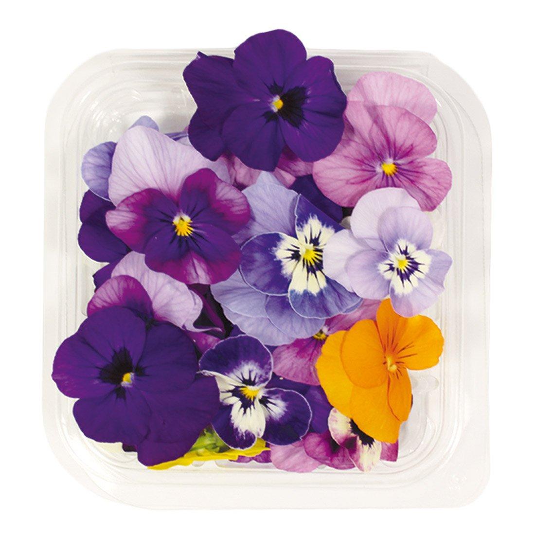 La Piccola, Violette